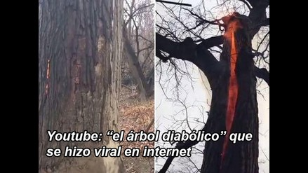 Youtube: el árbol diabólico que se hizo viral en internet