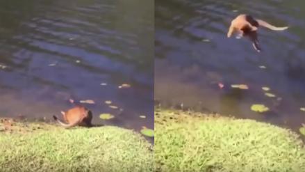 YouTube: Gato que bebía agua fue víctima de una inesperada sorpresa