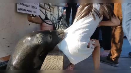 YouTube: El aterrador momento que vivió una niña al ser arrastrada por un león marino
