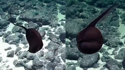 YouTube: Descubren pez con boca gigante en las aguas profundas de Hawái