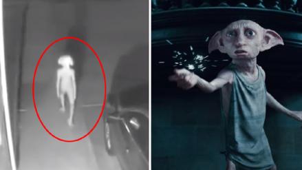 ¿Dobby eres tú? video registra a una criatura parecida a elfo de Harry Potter