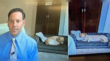 Meteorólogo muestra el mini-sofá de su perrito en un noticiero en vivo [FOTOS]