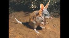 El juego tomó como mascota a un animal bastante extraño. Se fue hasta Australia para emular al bandicoot, animalito que inspiró a Crash.